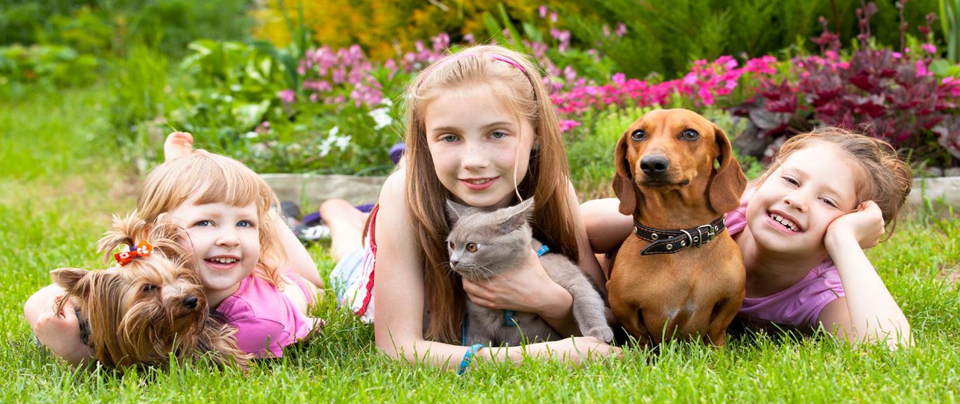 Family Pet Dog&Cat Cremation